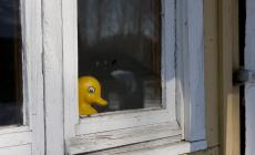 The yellow rubber duck is watching you