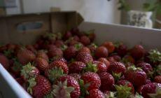 Box of Finnish strawberries