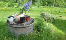 Herbs in pots and grass mulch
